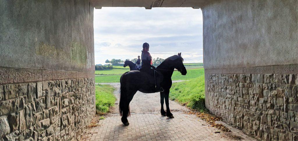 Paardrijden in Craubeek